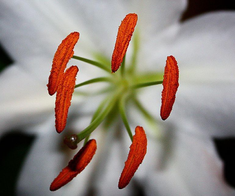 Lily Anthers