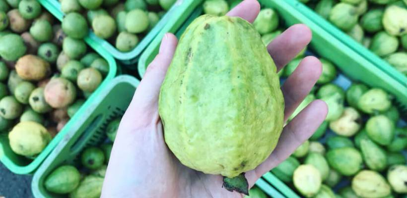 What Does Guava Taste Like? A Beginner's Guide to Guava
