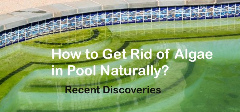 How to get rid of algae in pool naturally recent - How to get rid of algae in a swimming pool ...